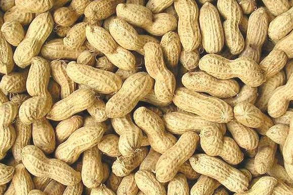 内蒙古厂家种植销售花生    花生的营养价值