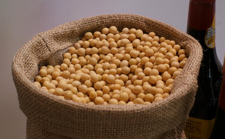 厂家种植大豆    五谷杂粮种植销售