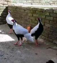 湖南旺达特种养殖 道县特种养殖 湖南永州野生动物驯养基地