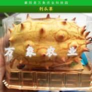 刺瓜果图片