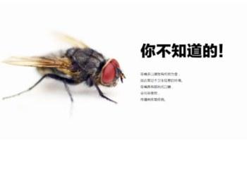灭苍蝇服务图片
