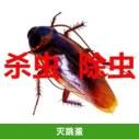 灭跳蚤费用 家庭杀虫 宠物灭跳蚤虱子 除虫灭鼠公司上门服务 专注害虫消灭服务 欢迎来电垂询