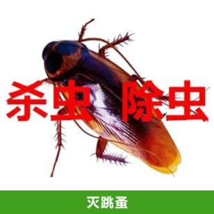 灭跳蚤费用图片