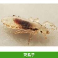 灭虱子图片