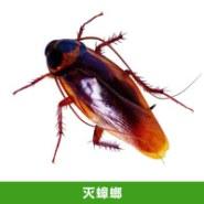 灭蟑螂价格图片