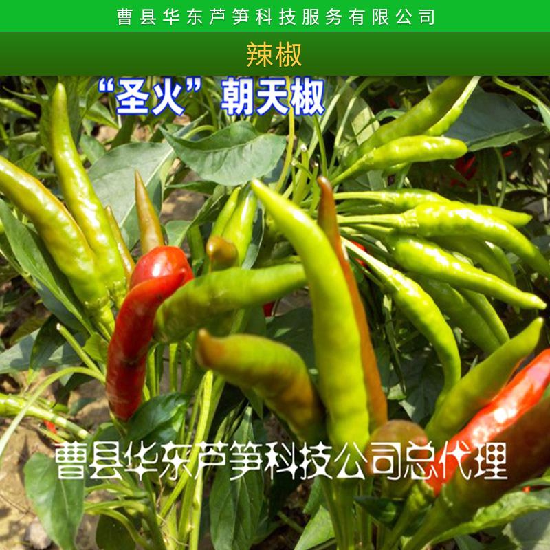 辣椒图片/辣椒样板图 (4)