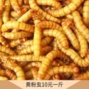 黄粉虫销售 香脆面包虫干 散装黄粉虫干 健康中药材黄粉虫 欢迎来电订购