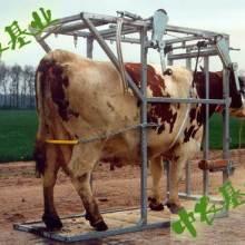 牛用保定架