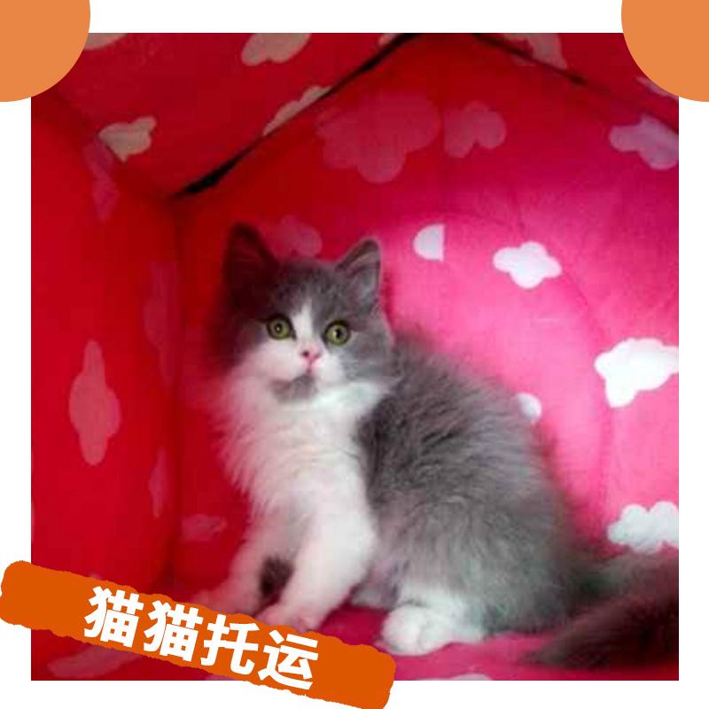 专业猫猫托运 高品质国内国外宠物代运输团队服务 与爱宠出游请致电
