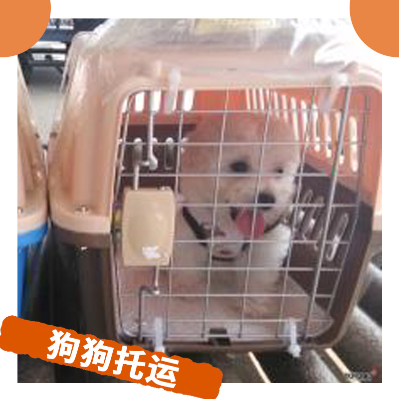 狗狗托运图片/狗狗托运样板图 (3)