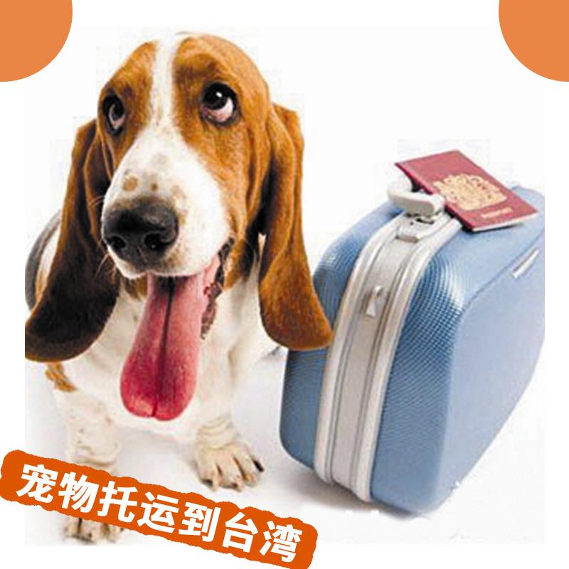 宠物托运到台湾 大陆到台湾宠物代理运输 与爱宠同游台湾 价格优惠