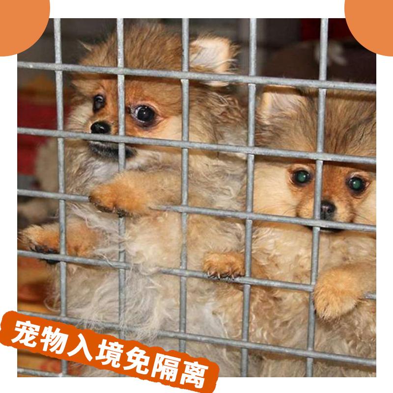国际宠物托运 宠物报关清关宠物入境免隔离 回国出国空运宠物