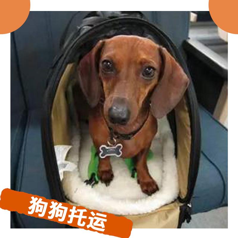 狗狗托运图片/狗狗托运样板图 (2)