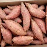 烟薯25批发销售  山东烟台产 烟薯蜜薯  面向全国大量供货