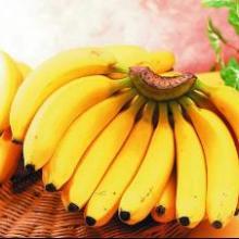 优质巴西香蕉苗 供应香蕉苗电话 供应香蕉优质种苗 供应巴西香蕉苗