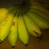供应香蕉苗电话 供应优质香蕉苗 供应香蕉优质种苗 优质苹果粉供应