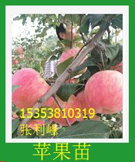 苹果苗价格 苹果苗直销 苹果苗供应商 苹果苗价格 苹果苗基地  苹果苗供应  广州苹果苗  广东苹果苗