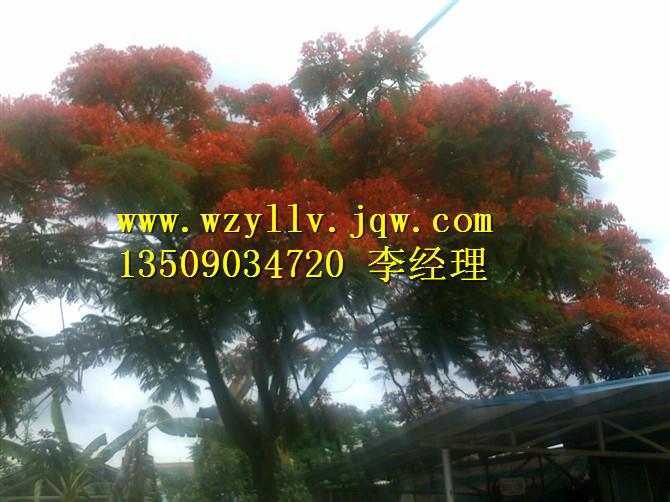 广东绿化苗木、绿化苗木供应商、买绿化苗木找哪家