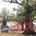 水泥仿真树制作假树 大门制作公司图片