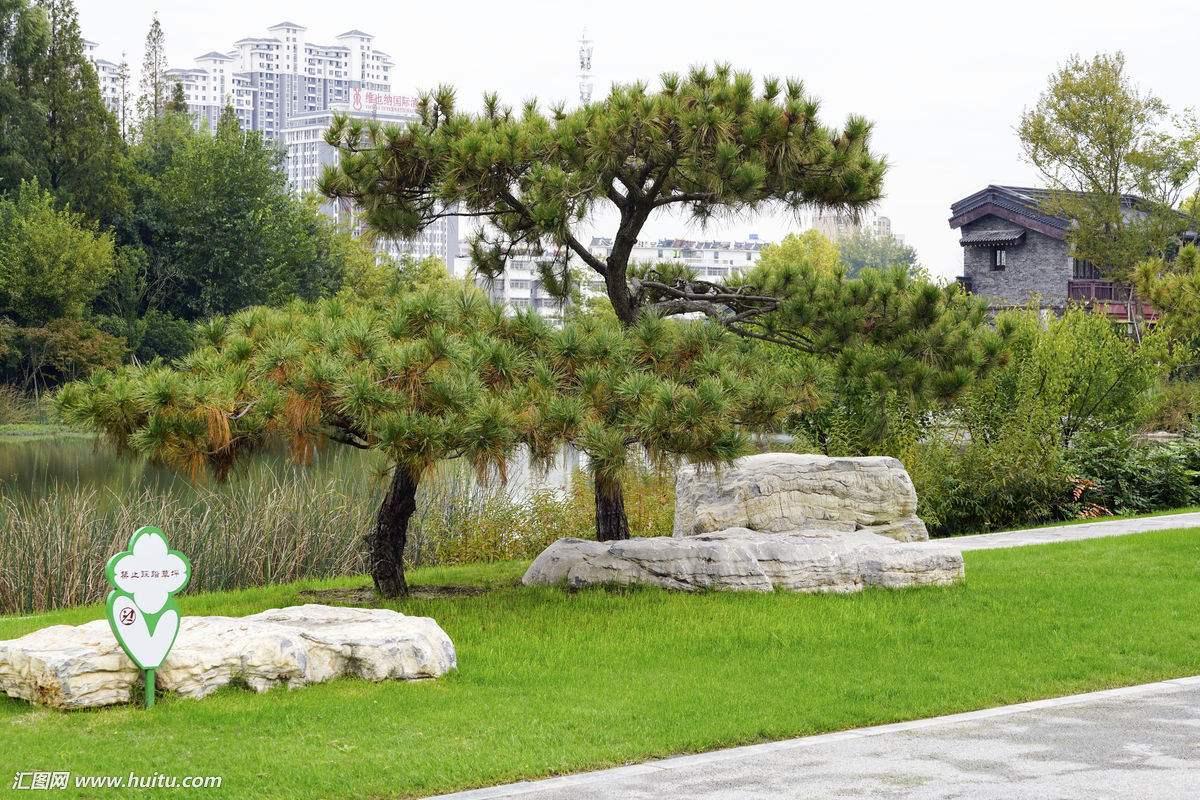 大树造型罗汉松盆景 罗汉松盆景报价 罗汉松盆景哪家好 罗汉松盆景日照批发