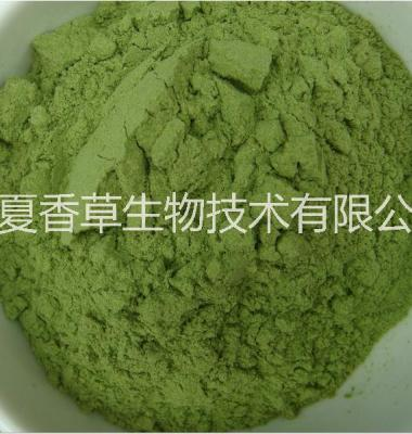 西芹粉价格宁夏芹菜汁浓缩粉图片/西芹粉价格宁夏芹菜汁浓缩粉样板图 (4)