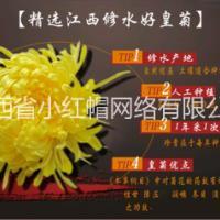 金丝皇菊的冲泡方法      金丝皇菊的生产厂家     金丝皇菊供应商      金丝皇菊