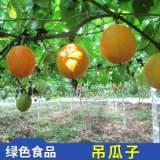 稼和农业科技供应吊瓜子 特打吊瓜子洽洽零食坚果 实惠价格批发