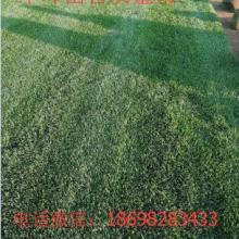 辽宁大连内蒙吉林秦皇岛绿化草坪种植季节方法价位卖草河北草坪灌木长春绿化