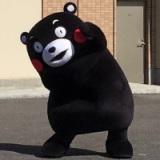 卡通人偶熊本熊,卡迪熊等租赁!