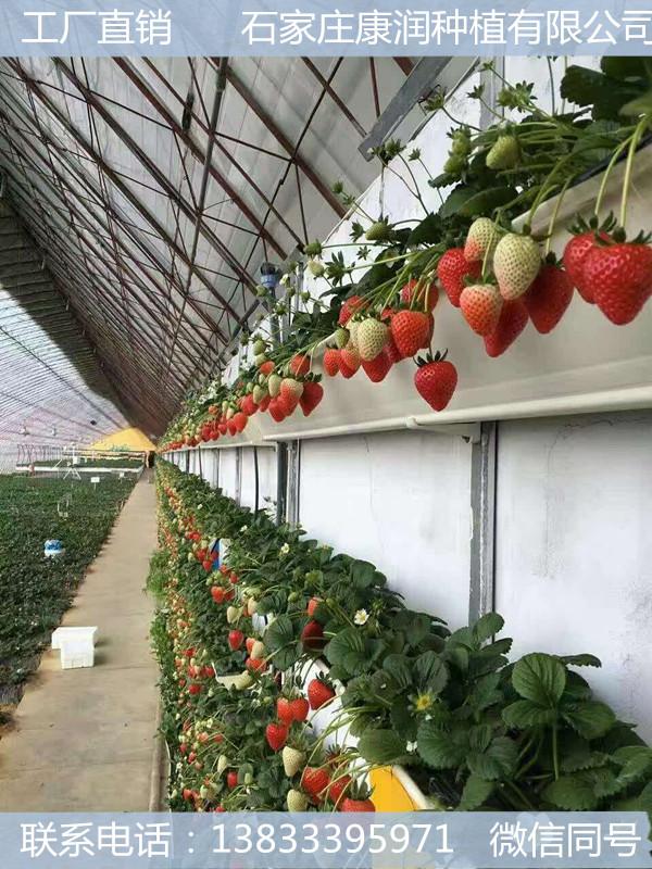草莓种植槽@草莓种植槽价格@草莓种植槽批发@草莓种植槽哪里有卖@草莓种植槽零售@草莓种植槽销售