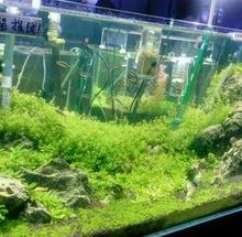 上海小科鱼展览 上海水母展览 上海白孔雀租赁服务 上海才艺狗出租价格批发