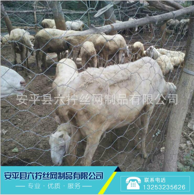 镀锌拧花六角网 养殖专用铁丝网 养殖网围栏 圈羊网直接生产厂家