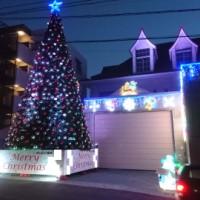 大型松针圣诞树