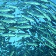 海洋鱼胶原蛋白肽图片