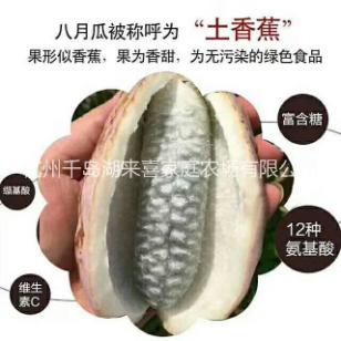 保健水果营养丰富的八月瓜优质苗图片