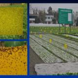 供应农业用具-粘虫板(黄板) 农业用具粘虫板农业用具粘虫板厂家直销