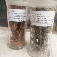 河南教学生药标本  厂家供货  价格实惠 欢迎来电