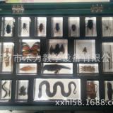 各种动物包埋标本动物王国 观赏教学水晶标本 河南琥珀标本厂家自产自销