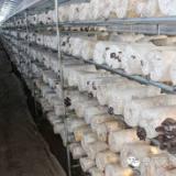 智慧农业-菌菇房环境控制系统-整体解决最新方案