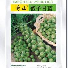 进口孢子甘蓝 孢子甘蓝种子公司销售进口种子价格特色蔬菜种子图片