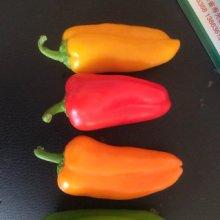 三色彩椒水果辣椒种子特色辣椒种子 水果种子 进口辣椒种子 种子公司销售