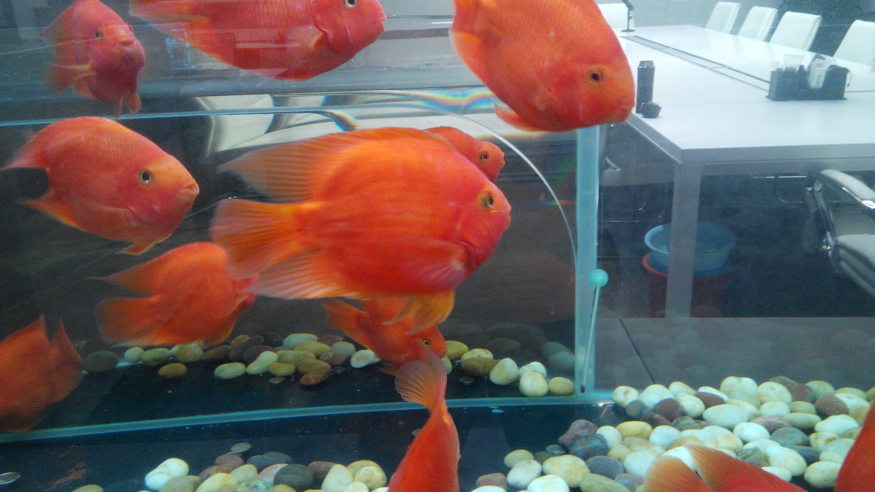 大型造景墙面鱼缸  负压鱼缸