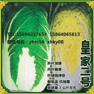 皇家二号春白菜种子高产高营养大白菜种子抽薹性稳定大白菜种子外型美观大白菜种子白菜基地种植价格