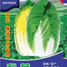 70天秋黄黄芯大白菜种子白菜基地种植价格种子公司批发保健菜蔬菜价格黄心白菜种子批发