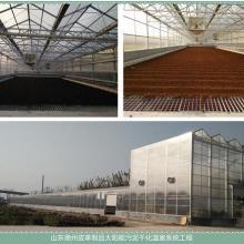 供應煜林楓皮革污泥干化處理太陽能污泥干化溫室圖片