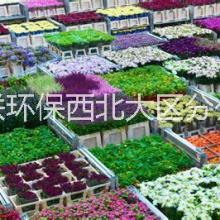 诺福来自欧鲜花干花出口专用保鲜剂