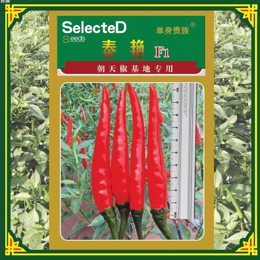 单生泰艳朝天椒新品种推荐 朝天椒辣椒种子基地 进口种子价格 泰系品种辣椒种子  单生长辣椒种子