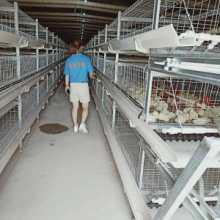 鲁兴农牧肉鸡厂肉鸡舍的卫生管理批发