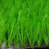 足球草,海南足球场人工草坪价格,海口足球场人工草坪行情