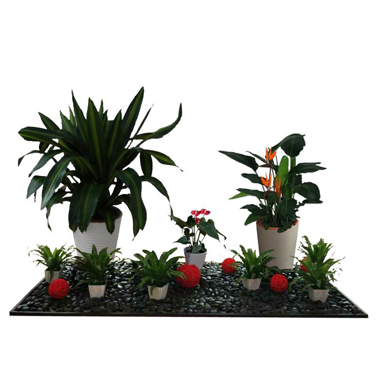 广州市花艺组合造景价格 广州组合盆栽设计 广州造景植物出租 绿化